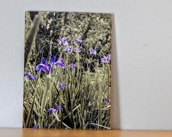 Blue Through the Grass - A3 Framed Print