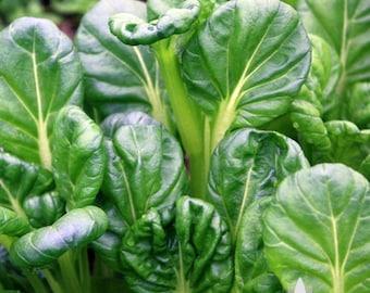 Tatsoi Mustard Greens Heirloom Seeds - Non-GMO, Open Pollinated, Untreated