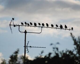 Nature photography Digital photograph of a flock of birds
