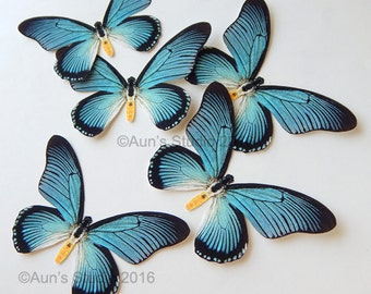 Blue Paper Butterflies, realistic butterfly cutouts, 5 Blue Swallowtail butterflies