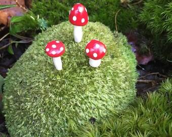 Mushroom picks for your terrarium