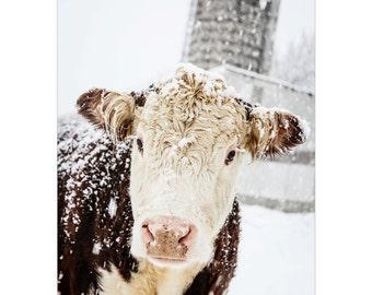 Cow Art, Farmhouse Print, Cow Photo, Farmhouse Rustic Decor, Silo Photo, Cow Print, Large Wall Art, Winter Art, Snowy Cow, Fine Art Print