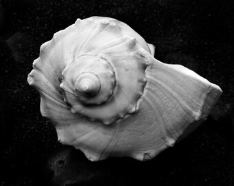 Black and White Photography Canvas - Seashell No.6 - Fine Art Print - Nature Photography - Ocean Decor - Beach Decor - Cottage Wall Art