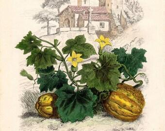 1854 Melon Print, Vintage Fruit Print, Kitchen Art, Antique Botanical Print, Color Plate, French Natural History