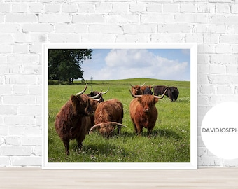 Highland Cow Print, Scottish Cow Print, Cattle Print, Animal Photography, Cattle Wall Art, Digital Download, Highland Cow Wall Art