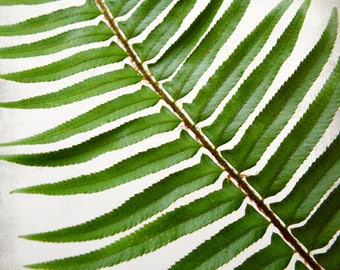 Fern leaf botanical print - green wall art - nature home decor - modern rustic living room art  - Sword Fern