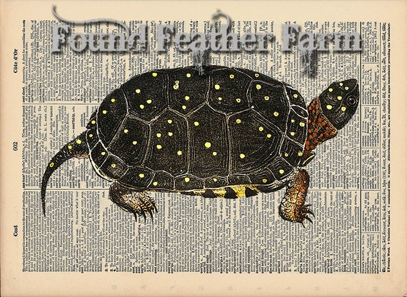 """Vintage Antique Dictionary Page with Antique Print """"Turtle Three"""""""