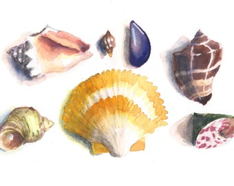 Seashell aquarelle impression 5 x 7