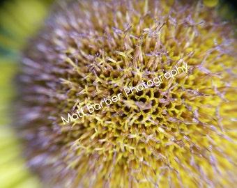 Macro Sunflower Photo Print