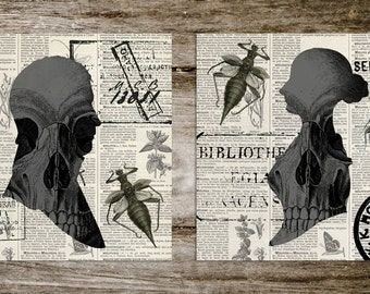 Vintage Style Antique Silhouette Skull & Insect Print Set from Curious London