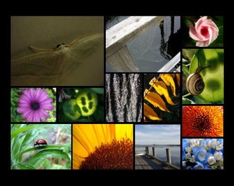 Any TWO 8 x 10 prints matted YOUR CHOICE
