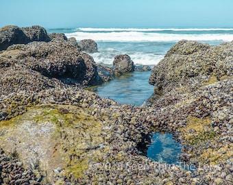 Oregon Coast - Photographic Print