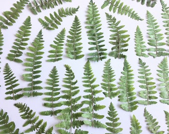 Dried Pressed Fern Leaf, Real Dried Fern Leaves, Pressed Feather Fern - 20 piece