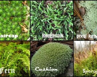 Live Moss & Lichen, 1 gallon bag, best deal and quality, beautiful garden fairy house, bonsai, vivarium, indoor plant, fast delivery