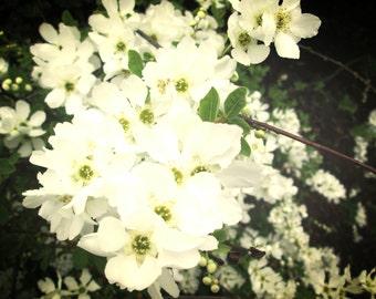 PHOTO WHITE FLOWERS