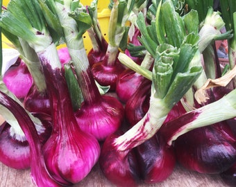 Onion Photograph, Onion Photography, Fine Art Photography, Kitchen Photography, Farmers Market Photography