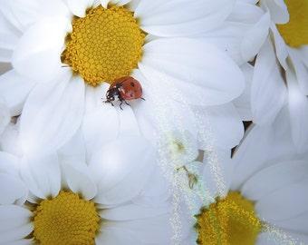 Girls nursery decor. Magic ladybug at the camomile. Wall decor Fine art. White, blue. Canvas or paper print 8x12, 12x18, 16x24 or 24x36