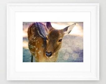 SALE: Nursery Decor, Deer Print, Fine art Photograph, Kids Room, Print 5x7'', Woodland Print, Natural History, Forest Print