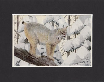 Canada Lynx Print 1916 by Louis Agassiz Fuertes Vintage Mounted Bookplate Picture with Mat Canadian Lynx Picture Lynx Cat Print