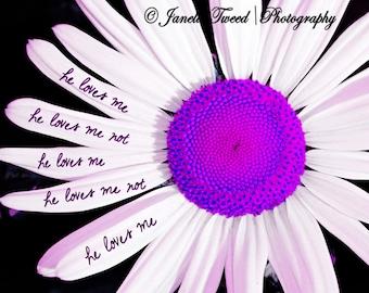 Purple Daisy Print, Flower Print, Daisy Photo, Daisy Picture, Flower Print, Daisy Print, Daisy Photo, Flower Photography, Purple Daisy