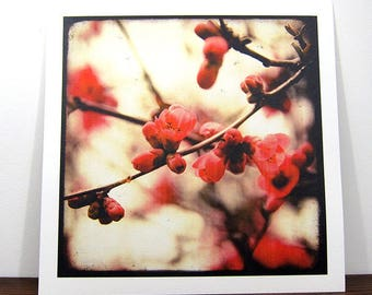 Red bloom - Expo 30x30cm - signed and numbered print