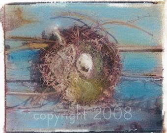 Polaroid transfer Nest