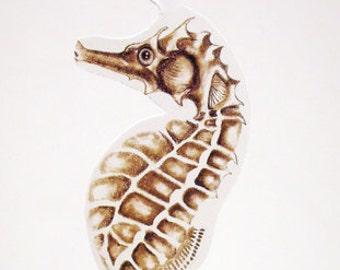 Seahorse Illustrated Ornament