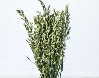Natural Avena Green Oats - Dried Flowers