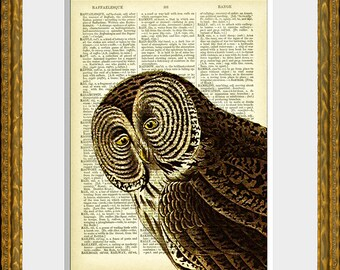 OWL 33-02 - recycled book page print - an upcycled antique dictionary page with an antique wise owl illustration - home decor