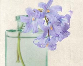 Flower Photo, Spring Flower Photography Print, Floral Art Print, Blue Flower, Wall Art, Home Decor, Nature Wall Art