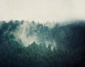 Foggy Forest Print, Oregon Landscape Photography, Nature Photography, Large Wall Art, Fine Art Photography Print, Teal, Landscape Print
