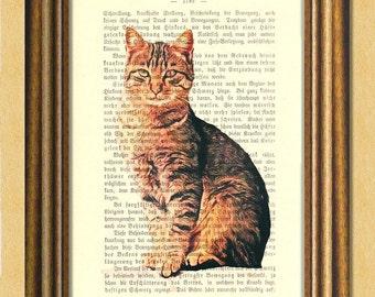 My TABBY CAT - Dictionary art print -Wall art