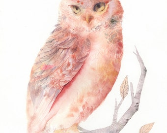 """Pink and Salmon Owl - 13 x 19"""" Archival Print"""