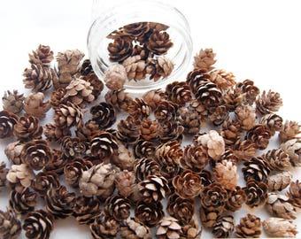 100 Mini Pine Cones, Small Pinecones,  Primitive Craft, Rustic Decor (PC 3)