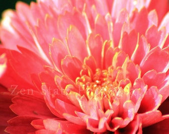 Salmon Pink Flower Photo. Nature Photography. Flower Photography Wall Art. Unframed Photo Print, Framed Print, or Canvas Print. Home Decor.