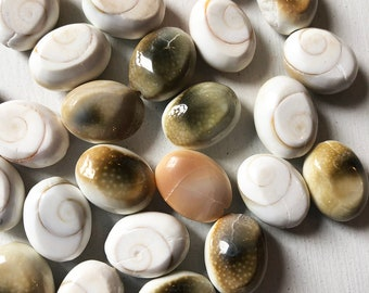 16 x 12mm Oval Shell Beads