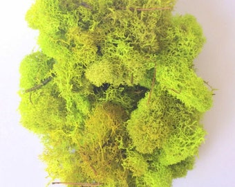 Reindeer Moss Chartreuse 1 OZ Bag