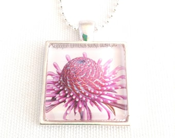 flower necklace, postage stamp pendant, Australian native rose coneflower, 2015