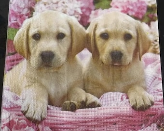 Napkin puppies on a background of flowers