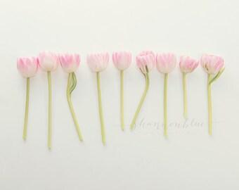 tulip still life photograph / pink, flower, bouquet, soft pink, lime green, spring/ tulip study no. 2 / 8x10 fine art photograph