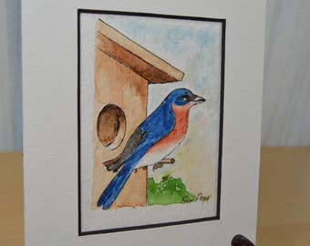 Original ACEO Watercolor Painting - Eastern Bluebird - Pen and Ink Art