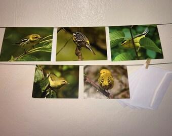 Bird Photo Greeting Card Set of 5
