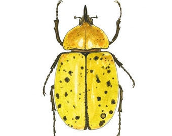 Entomology Beetle Art Print, Insect Bug Art , Entomology Art, Watercolor Bug, Nature Illustration, Gardening gift, Children's Room
