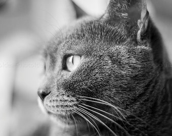 Photo of a grey cat, fine art print for home decor, animals, kitten, window light, black and white photography, wall hanging, home decor