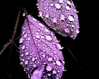 art of rain