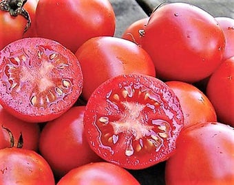 Siberian Tomato Heirloom Garden Seed 30+ seeds Rare Naturally Grown Open Pollinated Gardening