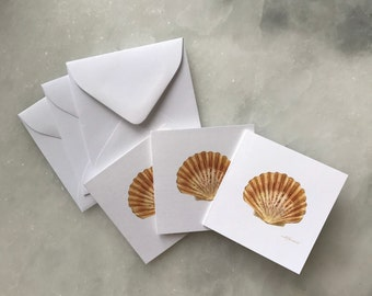 "Scalloped Shell 2.75"" Square Gift Enclosures -Pack of 3"