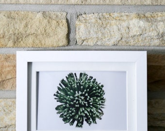 Abstract Fugi Mum Green Floral Seasonal Spring Summer Flower Home Decor Art Minimalist Photograph Print