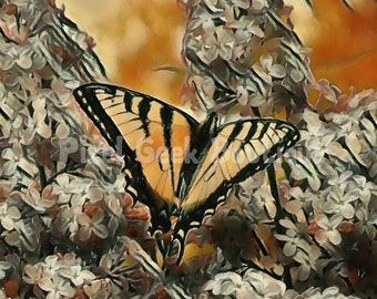 Butterfly Nature Photography, Butterfly Photo, Butterfly Wall Art, Butterfly Print, Butterfly Picture, Nursery Decor, Home Decor, Gift