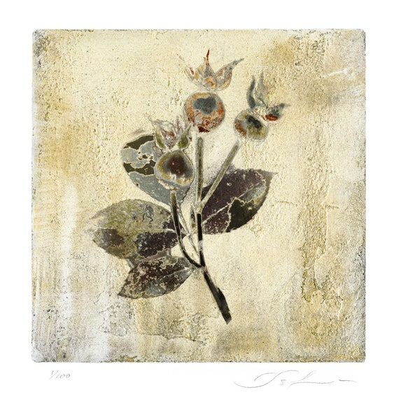 Little Rosehip, botanical print, mother's day, flower print, affordable art, venetian plaster, wall decor, limited edition, miniature